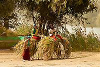 Carrying sugarcane on donkeys, near Luxor, Egypt