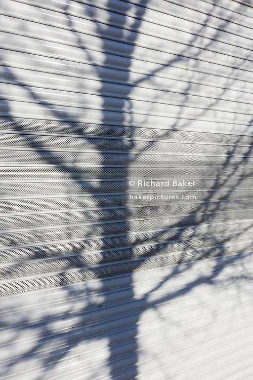 Shadow of a tree's bare branches and twigs on white shop shutters.