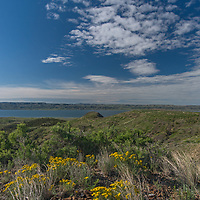 Wildflowers bloom on a ridge above Fort Peck Reservoir in Charles M. Russell National Wildlife Refuge, Montana.