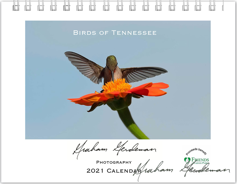 2021 Birds of Tennessee Calendar<br /> <br /> OUT OF STOCK / SOLD OUT! My calendars may still be available in local Nashville shops the Wood Thrush Shop, area Wild Birds Unlimited, and the Warner Park Nature Center. I am currently out of stock for web orders. Additional orders are possible - Email me through the contact form for information. <br /> <br /> _____<br /> <br /> Featuring 12 months of birds of the great state of Tennessee. All of the profits of this annual calendar will go to the B.I.R.D. Research program at Warner Park Nature Center in Nashville, funded through Friends of Warner Parks, a 501(c)(3) nonprofit organization (warnerparks.org).