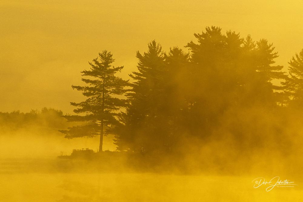 Pine tree silhouettes on lake shore with fog at sunrise, Burwash, Ontario, Canada