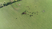 15-4-20 Aerial Photo Angus cattle, Grazing, Pasture,