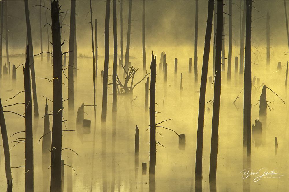 Misty dead snags in beaver pond, Killarney, Ontario, Canada