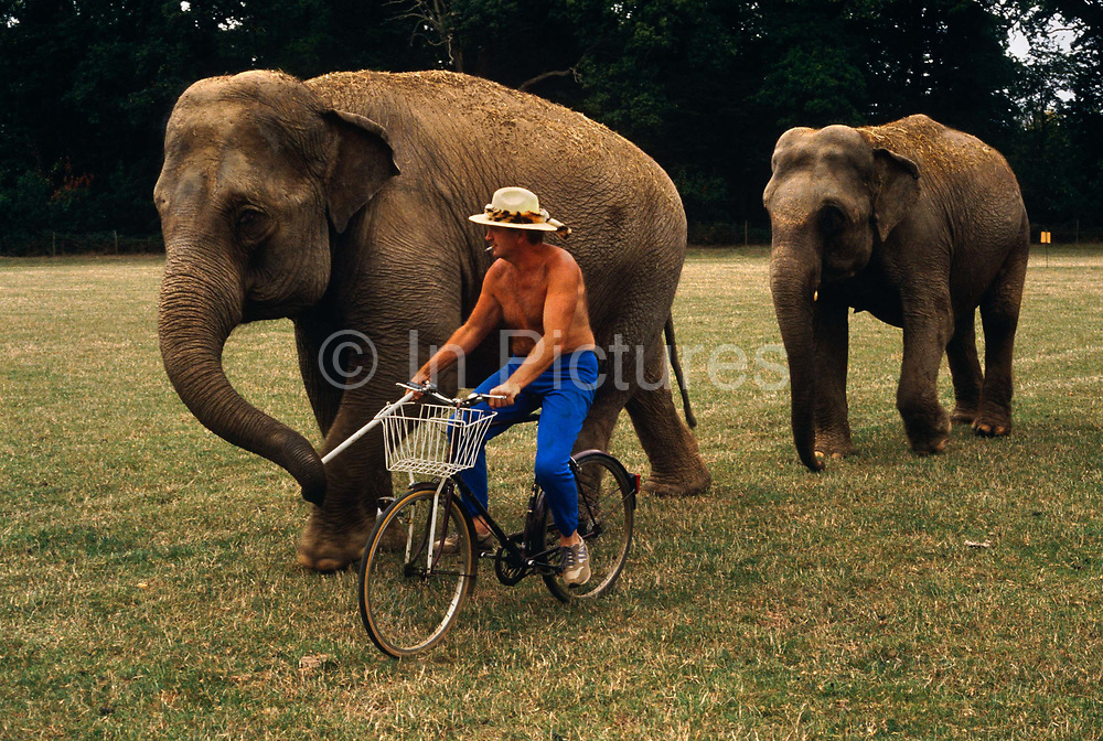 The circus animal trainer leads two of his elephant friends one morning after a Gerry Cottle show the night before. Riding a bicycle across a field in London, he leads one beast, its trunk holding his white stick while another follows behind. Peters is topless, wearing a wide-brimmed hat and bright blue trousers. Marcel Peters is a circus animal trainer who has worked in the ring for many years, starting with Billy Smart's Circus and working with Polar bears, tigers, lions and elephants. Gerry Cottle sold his elephants and Peters moved with them to the Spanish Circus Mundial. His real name is Marcel Peter Hodge.