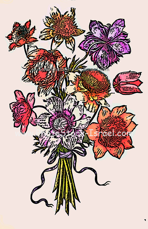 Digitally enhanced image of a Bouquet of Poppy Anemone (Anemone coronaria) 17th century hand painted on Parchment botany study of a from the Jardin du Roi botanical Florilegium of Prince Eugene of Savoy collection, Paris c. 1670 artist: Nicolas Robert