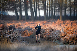 © Licensed to London News Pictures. 02/12/2019. London, UK. A man jogging through frost covered ferns at sunrise in Richmond Park in west London on a bright and freezing Winter morning. Photo credit: Ben Cawthra/LNP