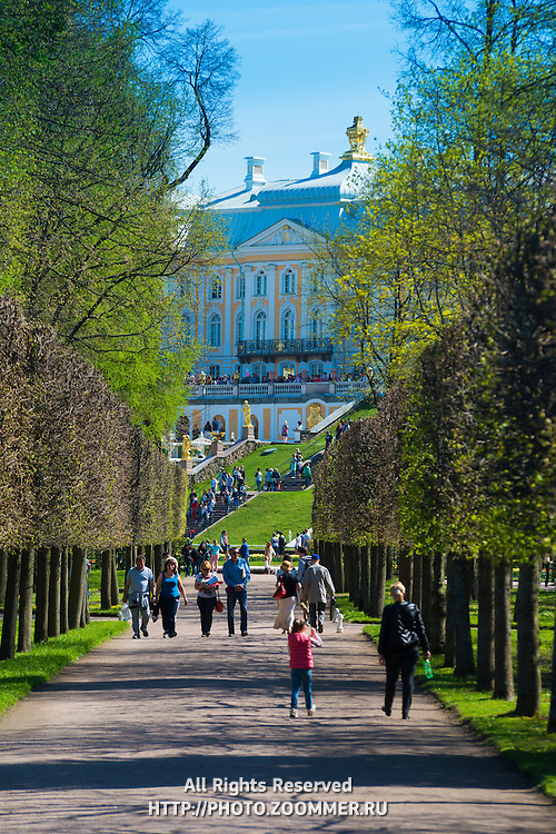 The Grand Palace In Peterhof, The summer residence of Peter the Great