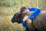 Finnegan, half Romney and half Texel sheep