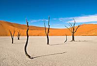Dead Trees at Dead Vlei, near Sossusvlei, in the Namib-Naukluft National Park, Namib desert, Namibia