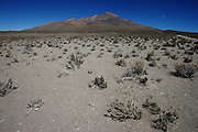 Scrubby bushes battle in the wind for survival on the Bolivian Altiplano