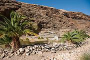 Desert Oasis, Brandberg Mountain, Damaraland, Namibia
