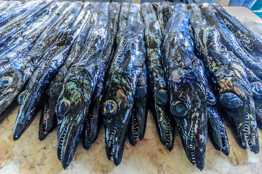 Espada Preta fish in Madeira, Portugal. Espada Preta is the unique Black Scabbard fish of Madeira. This deep-sea fish is line-caught at depths of over 600 metres, preferably at night.