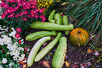 France, Bourgogne-Franche-Comté, Yonne (89), Sens, parc du Moulin à Tan, label «jardin remarquable» // France, Burgundy, Yonne, Sens, Moulin à Tan park and garden