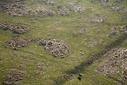 Nederland, Utrecht, Rhenen, 11-02-2008; Galloway rund, wintervast in de Blauwe Kamer; nieuwe natuur aan de Neder-Rijn:het rivieroeverreservaat is ontstaan door het afgraven van de zomerdijk met als gevolg dat het natuurgebied regelmatig overstroomt; er ontwikkelen zich moerassen en ooibos (wilgen), de runderen en Koniks paarden zorgen voor de begrazing; onderdeel van 'het Utrechts Landschap', natuurreservaat, rivieroeverreservaat, natuurpark..luchtfoto (toeslag); aerial photo (additional fee required); .foto Siebe Swart / photo Siebe Swart