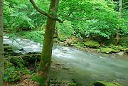 Rushing stream, Clifton Gorge Nature Preserve, Clifton, Ohio