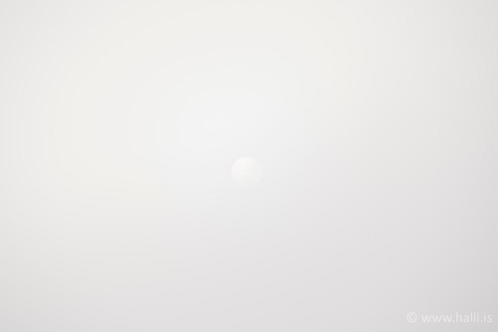 Bird flying in fog at sunset in Akureyri, Iceland - Fugl á flugi í þoku á Akureyri