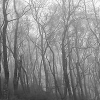 Misty woods in Hebden Dale , near Hebden Bridge