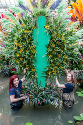 © Licensed to London News Pictures. 04/02/2016. London, UK.  4 February 2016. Kew horticulture staff members, (L) Elisa Biondi and (R) Jess Snowball, check plants in the pond as preparations are made for the opening of Kew Gardens' 21st annual Orchid festival (6 February to 6 March).  The Princess of Wales Conservatory has been transformed to present a sensory journey through the striking flora of Brazil during Carnival Season and includes two enormous rainforest tree structures as well as figures in the pond representing carnival dancers.<br />  Photo credit : Stephen Chung/LNP