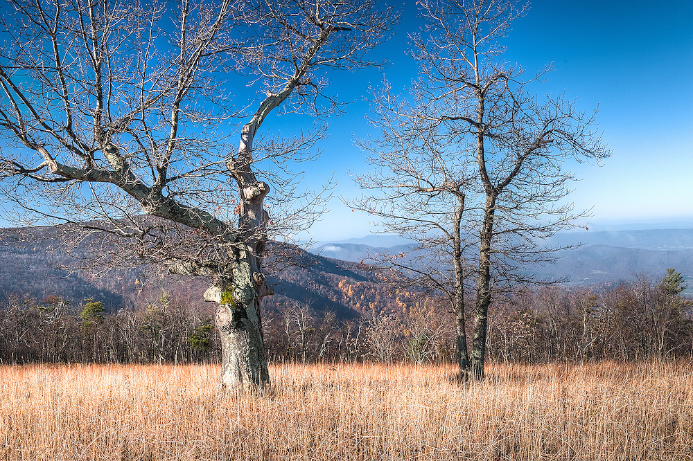Shenandoah NP, Virginia. These two oaks framed the valley below, where clouds and fog still rose in the early morning light.