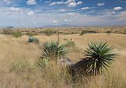 Grasslands near Kentucky Camp, Sonoita