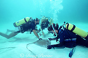 biologists measure a stingray during U. of Miami research