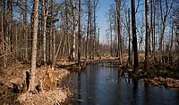 03.2015 Puszcza Bialowieska N/z lesny strumien fot Michal Kosc / AGENCJA WSCHOD
