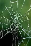 Dew drops on the center of an orb web, mountain meadow, Valle Grande, Valles Caldera National Preserve, Jemez Mountains, NM, © David A. Ponton