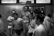 Bulgarian born  Kotooshuu, real name Kaloyan Stefanov Mahlyanov, who is the sport's top-ranked Western wrestler, and one of Sado Gatake's biggest earners..stand above the others..Morning  workout session in the Sado Gatake stable, 30 minutes west of Tokyo,
