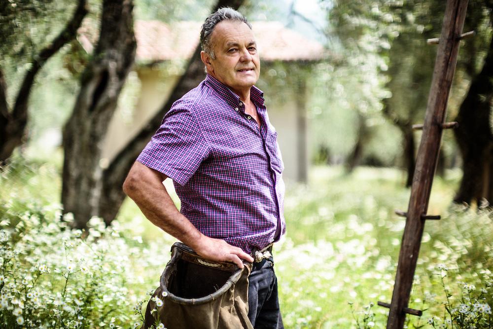 20 JUN 2012 - Malcesine (VR) - Lago di Garda - Aldo Maroadi, presidente del Consorzio Olivicoltori.