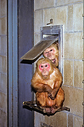 Two Monkeys In Cage
