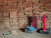Coffeee beans stored at coffee plantation, Malabar, Mangalore, Kerala, India.