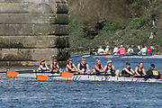 Mortlake/Chiswick, GREATER LONDON. United Kingdom. Champion of the Thames (Cambridge) <br /> W.MasD.8+. competing in the 2017 Vesta Veterans Head of the River Race, The Championship Course, Putney to Mortlake on the River Thames.<br /> <br /> <br /> Sunday  26/03/2017<br /> <br /> [Mandatory Credit; Peter SPURRIER/Intersport Images]