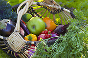 Harvest of the phytonutrient-rich eggplant, peppers, carrots and beets from an edible-rich garden. (Mike Siegel / The Seattle Times)