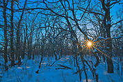 Bur oak forest in winter at sunset<br />Birds Hill Provincial Park<br />Manitoba<br />Canada