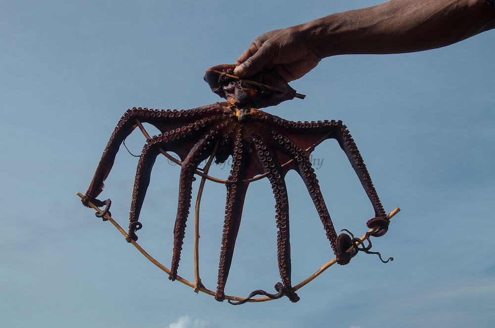 Octopus in Fish Market<br /> Biak Island<br /> West Papua<br /> Indonesia