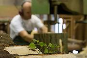 Een man zaagt een boomstronk. Produktie bij de grootste klompenfabriek ter wereld, Klompenfabriek Nijhuis B.V. in Beltrum. Voor de productie van klompen worden speciale en zelf ontwikkelde machines gebruikt. Hoewel het principe al erg oud is, worden de productietechnieken nog steeds verbeterd.<br /> <br /> A man is sawing a stump. Production at the biggest manufacturer of wooden shoes, Klompenfabriek Nijhuis B.V. at Beltrum (NL). For the production special and self developed machines are used. Although the principe of the manufacturing is very old, the techniques are still being improved.
