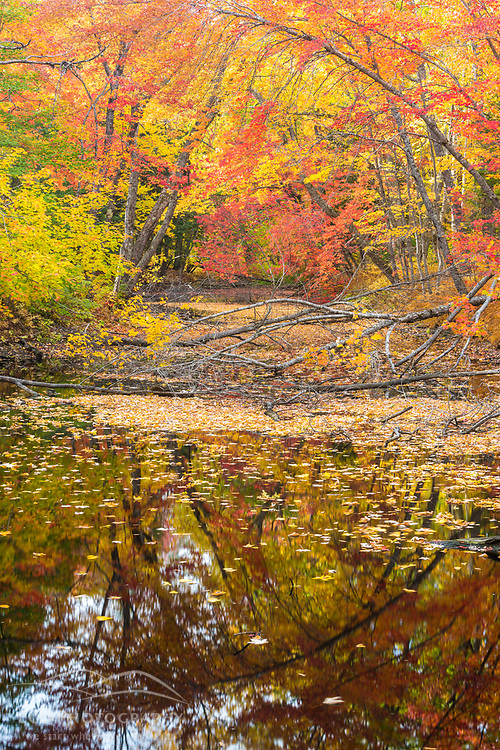Fall foliage in the forest adjacent to the East Branch of the Penobscot River in Maine's Northern Forest.