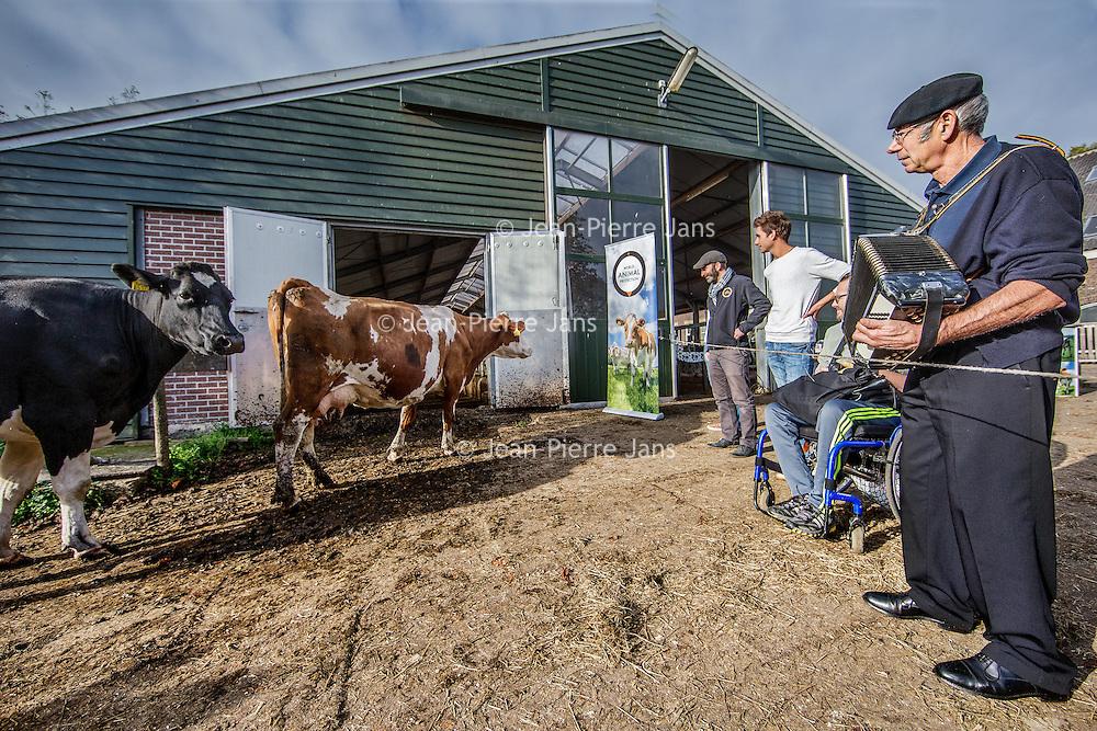 Nederland, Schipluiden , 29 oktober 2016.<br /> Als tegenhanger van de koeiendans in de lente, organiseert World Animal Protection bij boer Arie van der Berg van Hoeve Ackerdijk ook een 'koeien uitzwaai-evenement', waarbij symbolisch de laatste weidedag van de koeien wordt afgesloten met een uitzwaaidag.<br /> Nog maar tweederde van de koeien graast in het weiland.<br /> <br /> Foto: Jean-Pierre Jans