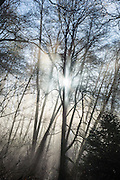 Morning sun rays pierce through winter trees and fog in Carkeek Park, Seattle, Washington, USA.