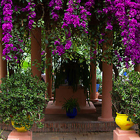 Africa, Morocco, Marrakech. Yves Saint Laurent's Jardin Majorelle.
