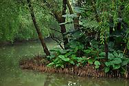 Riverine mangrove forest, Nansha wetland reserve, Guangdong province, China