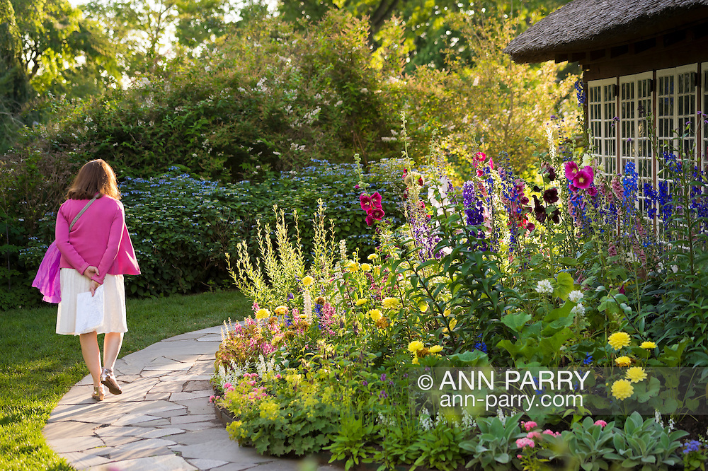 Old Westbury, New York, U.S. - June 21, 2014 - LA visitor walks around the colorful Cottage Garden at dusk to see Lori Belilove & The Isadora Duncan Dance Company perform during the Midsummer Night event at the Long Island Gold Coast estate of Old Westbury Gardens on the first day of summer, the summer solstice.