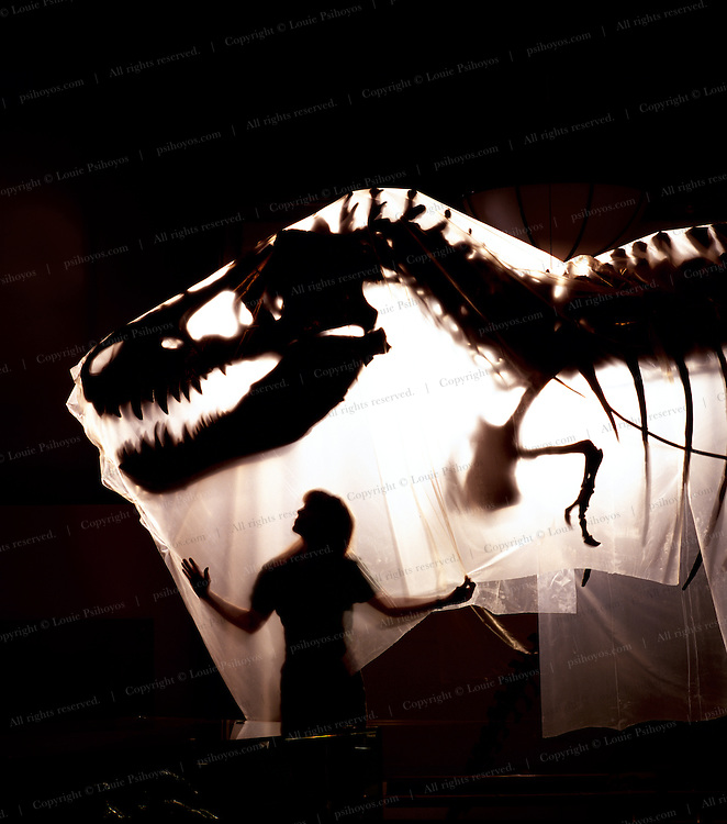 """T. Rex, """"tyrant lizard king,"""" was one of the largest-ever meat eating land animals.  The bi-pedal giant grew to some 40 feet (12 meters) and weighed up to 7 US tons (6.5 metric tons)"""