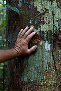 A native hand leaned on a tree at the Amazon forest in Brasil.