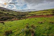 Pastureland near Dingle, Ireland