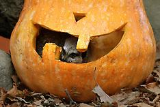 Halloween at Blair Drummond Safari Park - 26 Oct 2018