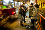 "Mario waiting with friends and his guiding dog ""Harley"" for a tramway in the center of Prague. Mario is a well known blind Roma musician originally from Slovakia living since he finished his studies in Prague, Czech Republic. Beside being a very talented multi-instrumentalist working as a professional musician he is also experimenting with photography as a another way to express himself."