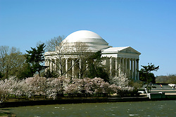 Washington, DC: Cherry Blossom Festival.  Cherry blossoms and Jefferson Memorial.  Photo #: washch104 (nef492)..Photo copyright Lee Foster, www.fostertravel.com, 510-549-2202, lee@fostertravel.com