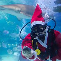 Tropicarium scuba diver Christmas 2012