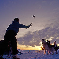 Great Slave Lake, Northwest Territories, Canada.A dog musher tosses bricks of food to his hungry team.